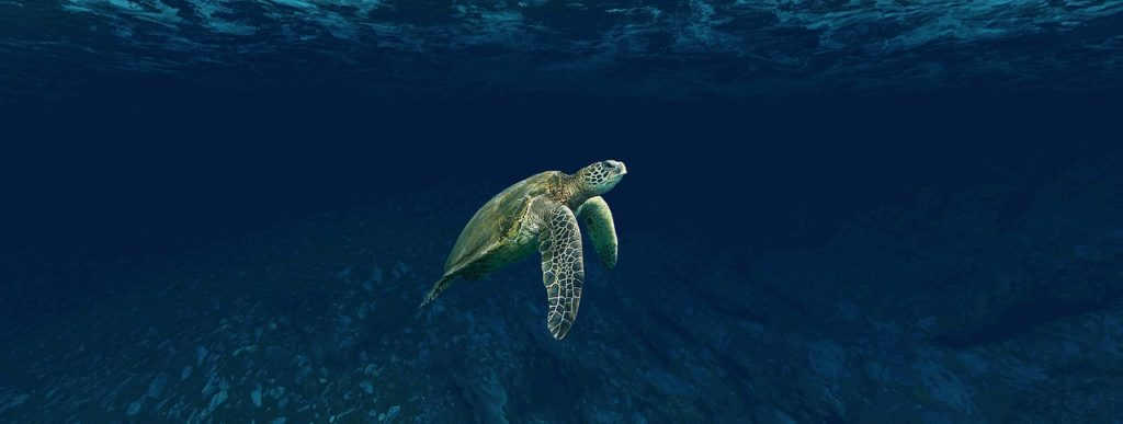 Clark Weeks recommends scuba diving at Great Blue Hole in Belize - sea turtle underwater